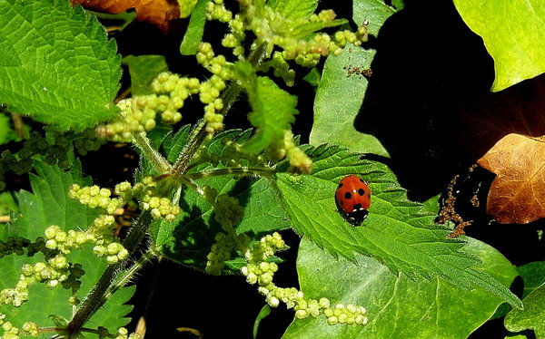 ladybird at home