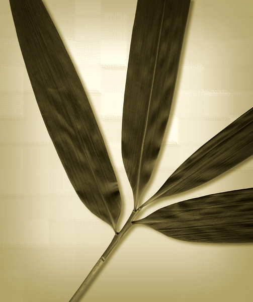 Branch 3: Variations on a long leaf branch.If you like my artwork,please go to my FacebookBusiness Page and like it:Billy Frank Alexander Design~ God Bless You! :-)~ Billy