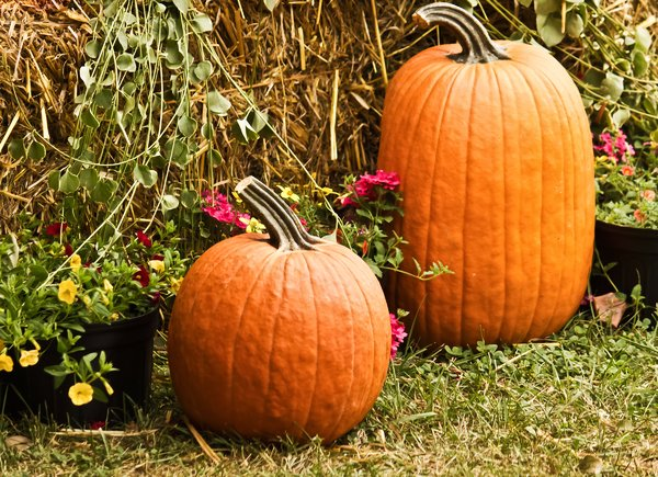 Two Pumpkins and Flowers