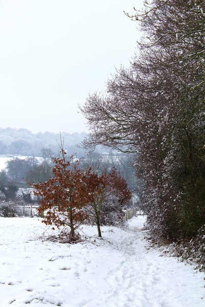 Snowy footpath: A snowy country footpath in West Sussex, England, in February.