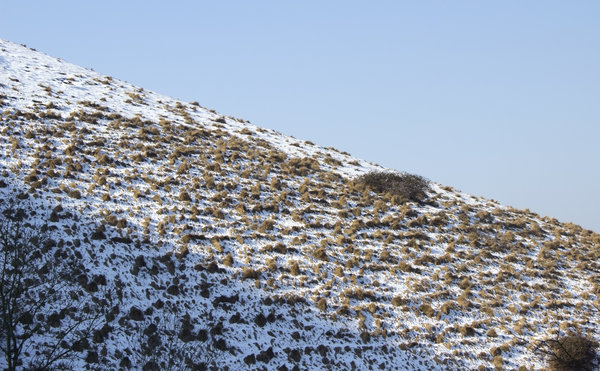 Hill of snowy grass tussocks