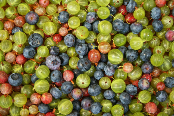Berries Background: Close up of gooseberries, blueberries and red currants.
