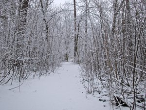 atmospheric winter forest