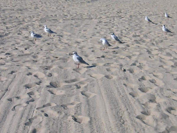 seagulls at the beach