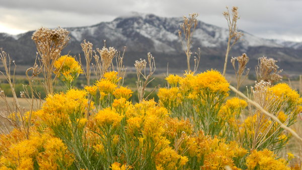 October Sage: My favorite park. It was the first snow of the season- October 8, 2011.