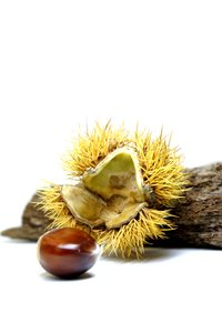 Chestnuts #1