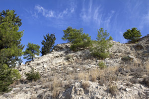 Dry coniferous landscape 3: A dry mountain slope in Cyprus with conifers and scrub.