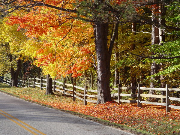 Country Road in Autumn: Split rail fence and Autumn leaves on maple trees in Ohio