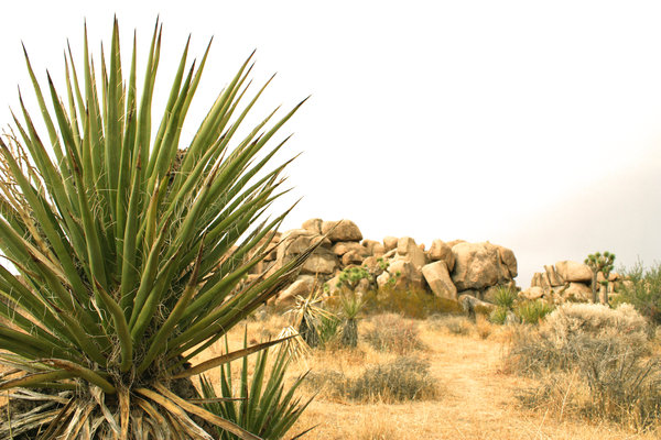 Desert landscape: A desert landscape close to the Joshua tree park in the USA.