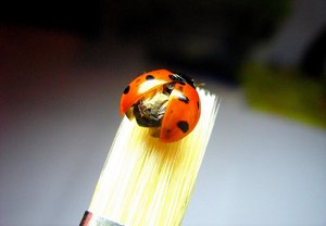 Ladybug: A ladybug on my brush