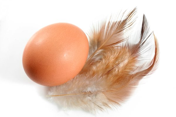 Egg & Feathers: Egg and feathers isolated on a white background.