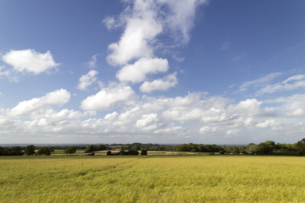 Blue and yellow landscape: Landscape of Sussex, England, in early summer, with a crop of ripening rape (oilseed) pods.