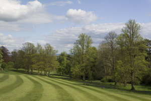 Parkland: Parkland with mown grass in southern England.