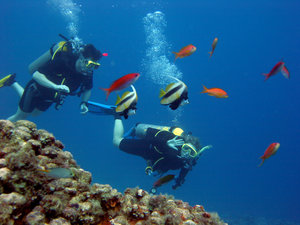 Diving in Egypt near Dahab in : Diving in Egypt near Dahab in the red sea.