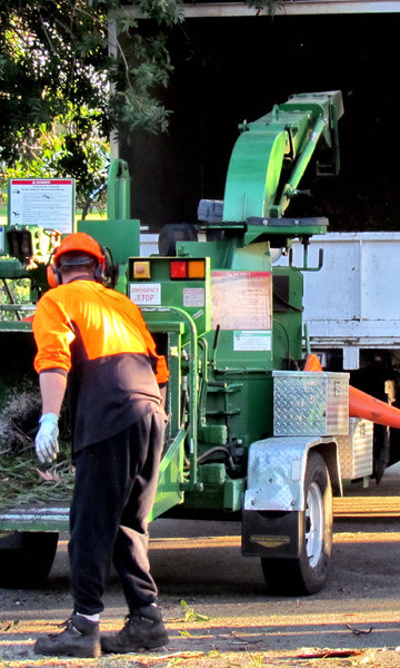 working men & machines5: workmen feeding tree branches into wood chipping machine