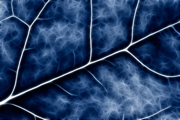 Blue Crucifer Abstract