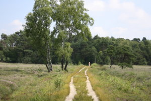 unpaved road through the heath