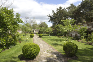 Garden path: A path between topiary box (Buxus) balls in an old walled garden in England in spring.