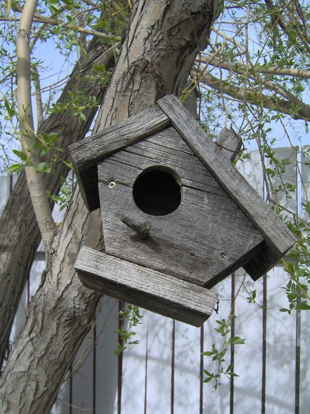 Bird House: This is shot of my bird house in the back yard. Unfortunately no birds ever go into it, the hole is too big.