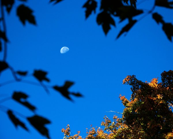 Moon over paradise: A fall sunrise in Ontario - the moon is just setting