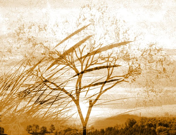 Landscape Collage 2: A collage of landscape images and a sunset. Sepia tones.