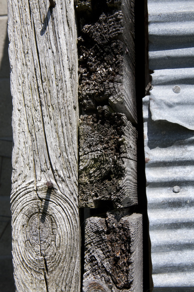 Weathered Wood and Metal: A closeup view of a piece of old weathered barnwood and corrogated metal.