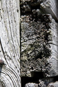 Weathered Wood: A closeup view of a piece of old weathered barnwood.