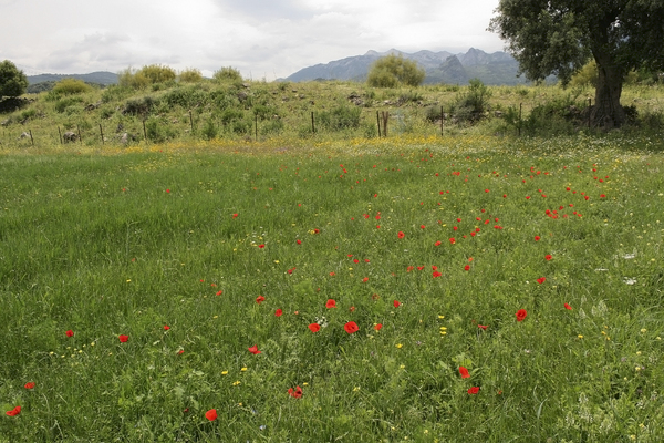 Spanish flower meadow