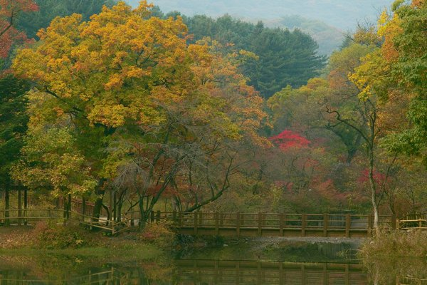 Autumn in Kwang Reung National