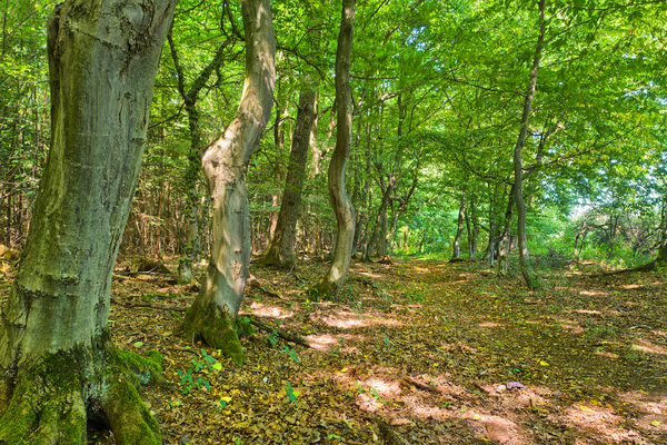 Forest Path - Fairytale Forest