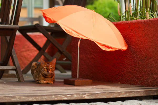 Cat with Beach Umbrella: Cat with it´s own Beach Umbrella