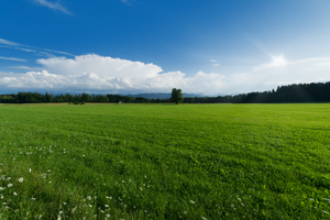 Green Field Landscape: Green Field Landscape - Alpine Foothills