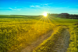 Golden Summer Meadows - Sunset: Path leading through Meadows on smooth Hills (Adobe RGB)