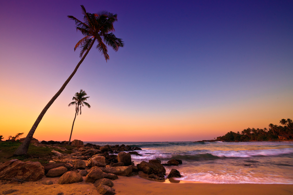 Sunset on Palm Beach: Sunset on Beach with Coconut Trees, Sri Lanka