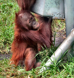 can I get under here: active you orangutan