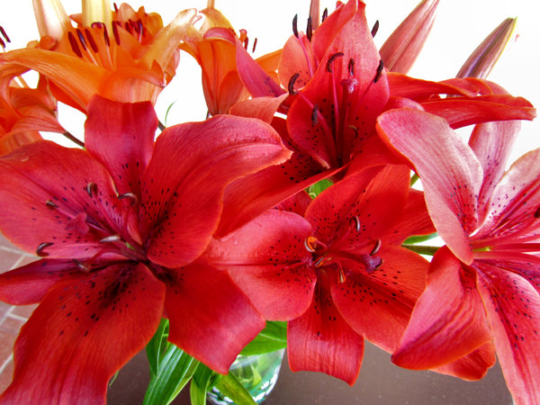 lily display2: colourful bunch of oriental lilies
