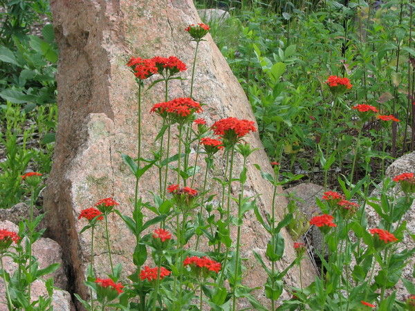 Reddish Orange Flowers