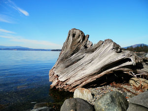 driftwood in the bay