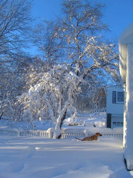 New England Winter Morning