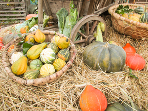 pumpkin still life: pumpkin still life