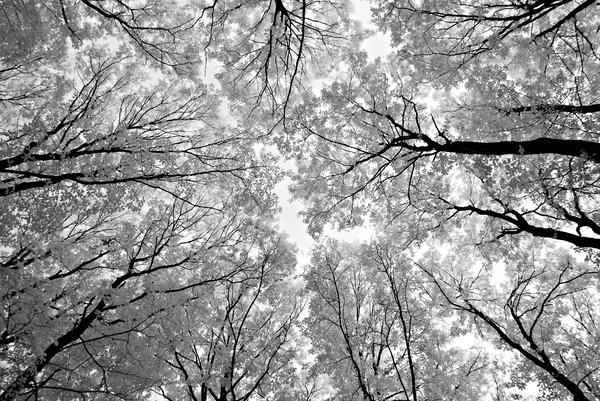 Deep Forest: A dense forest photographed in IR Camera