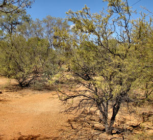 arid area3: dry bush country in central Australia