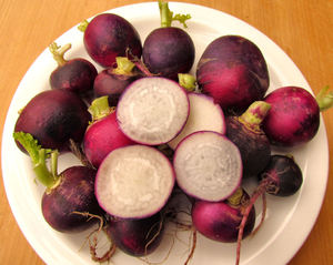 round purple radish4: purple heirloom radish variety