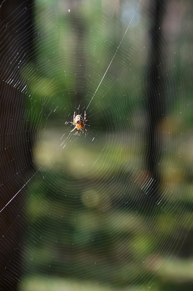 waiting for lunch: a spider in its perfect net
