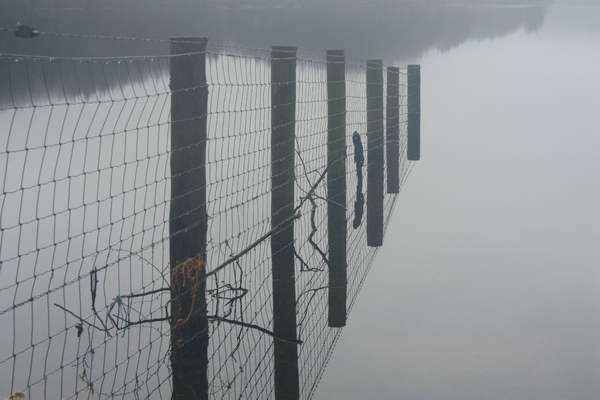 Still, misty loch: View of fence running into a still Scottish Loch in the mist