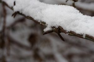 Barbed wire and snow