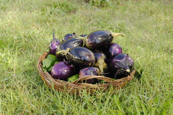 eggplants and peppers 3