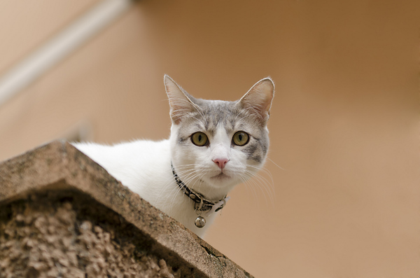 Cute cat with yellows eyes 2