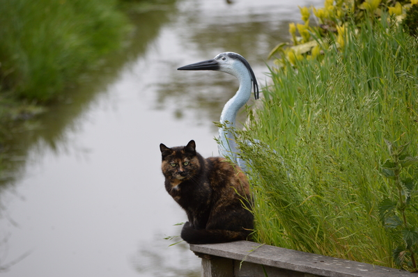A cat and a spoonbill