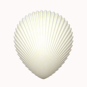 Shell 2: A scalloped seashell isolated on a white background. high resolution. Please use according to the image licence. You may prefer this:   http://www.rgbstock.com/photo/ns72hGw/Ammonite  or this:  http://www.rgbstock.com/photo/ns727uK/Ammonite+2